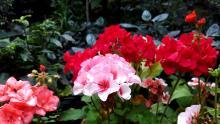 Цветочный переполох