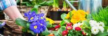 Открытый университет приглашает слушателей на курс лекций по садоводству и цветоводству «Искусство садовода»