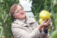 Где живут 80-летние томаты