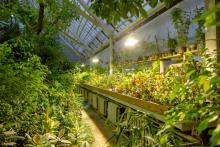 В томском ботаническом саду сменился директор