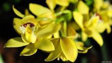 Курс &laquoВесна, весна!&raquo открывается лекцией &laquoКрасивоцветущие тропические орхидеи для домашнего выращивания&raquo