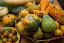 Агрономы ТГУ помогут томичам решить проблему витаминного голода