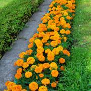 Набор Бордюр (оранжевый вариант)