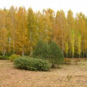Экспозиция Декоративные формы, осень
