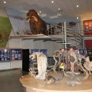 древние экспонаты Музея мамонта СВФУ