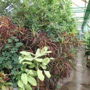 экспозиции тропических растений в оранжерее Якутского ботанического сада
